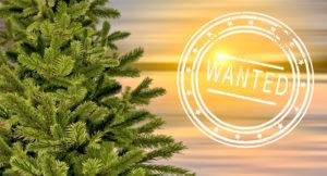 Weihnachtsbaum gesucht!